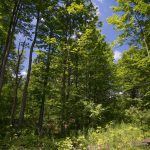 wooded lot 2