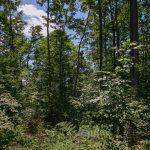 wooded lot 3